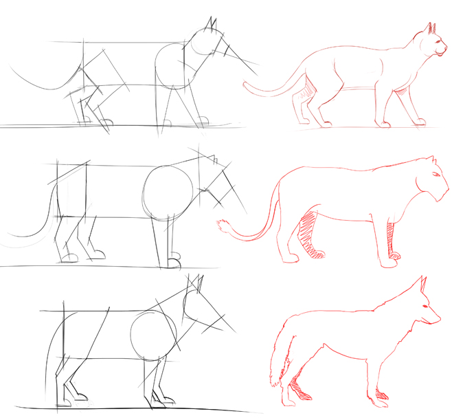 Comment dessiner facilement les animaux apprendre - Dessiner des animaux ...
