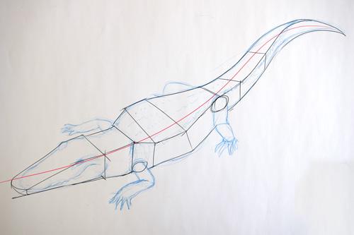 Schéma_corps_crocodile