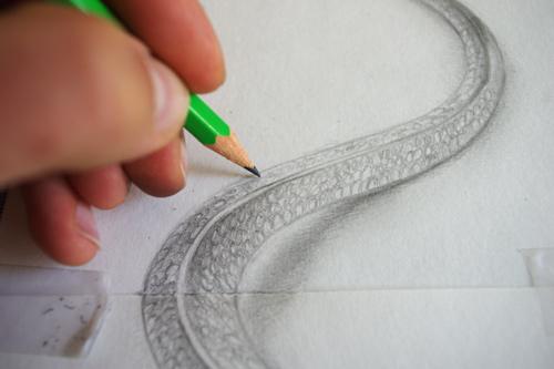 dessin_ecaille_serpent