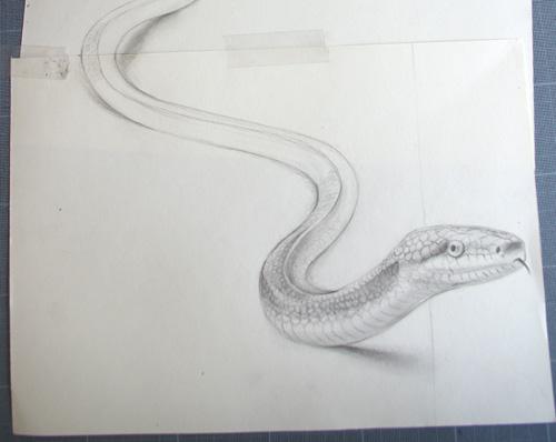 esquisse_serpent_tête_3d
