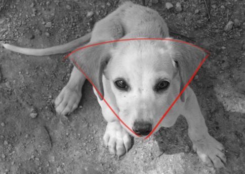 Apprendre a dessiner un chien vu de haut apprendre - Dessin tete de chien ...
