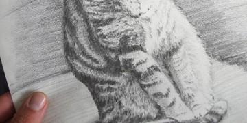 comment dessiner les poils de chat