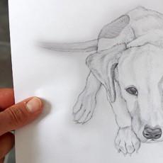 apprendre-dessiner-chien-poils