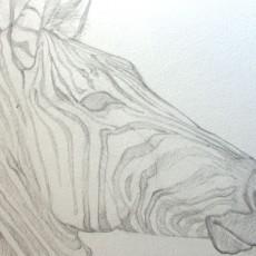 technique pour apprendre à dessiner un zèbre