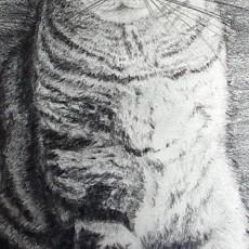 comment dessiner un chat dans l'ombre