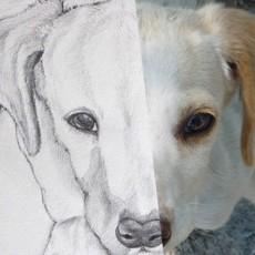 tutoriel pour apprendre à dessiner un chien pas à pas