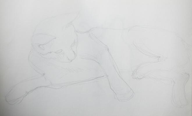 Dessiner un chat rapidement en faisant un croquis