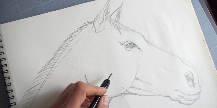 Apprendre A Dessiner Des Animaux Comment Dessiner Etape Par Etape Avec Dessin Creation