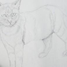 technique pour dessiner un chat au crayon