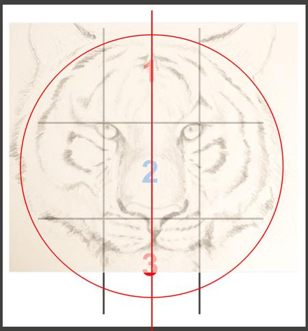 méthode pour dessiner une tête de tigre proportionnée