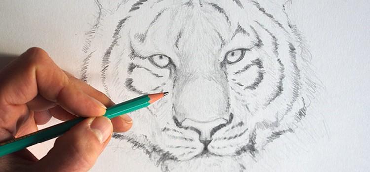 Apprendre dessiner un tigre avec le blog dessin cr ation - Apprendre a dessiner un tigre ...