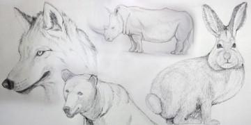 Cours de dessin gratuit et facile pour dessiner les animaux avec dessin-création