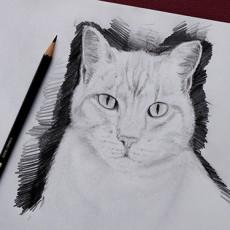 tutoriel de dessin en vidéo pour dessiner un chat facilement avec dessin-creation