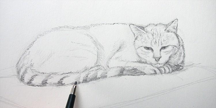 technique pour dessiner un chat couché au crayon