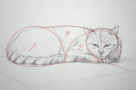 Comment dessiner un chat en le schématisant