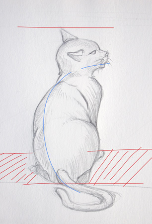dessiner un chat de dos et le mouvement du corps
