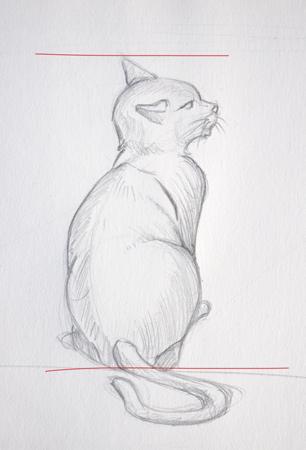 apprendre à dessiner les proportions et l'anatomie du chat