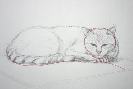 les repères pour dessiner un chat couché