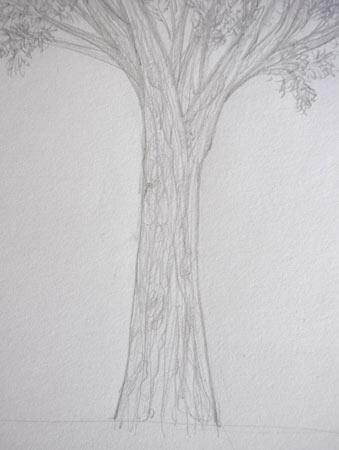 dessiner le bois et l'ecorce d'un arbre