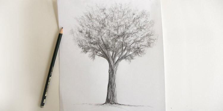 Comment Dessiner Un Arbre Au Crayon Technique Simple Apprendre