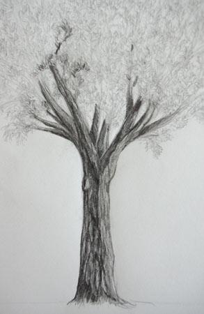 dessiner un tronc d'arbre contrasté