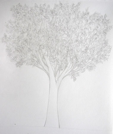apprendre à dessiner un arbre avec des feuilles