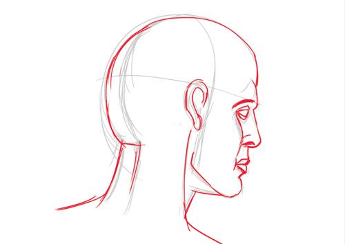 apprendre les bases de l'anatomie pour dessiner une tete en perspective