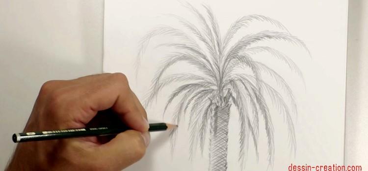 comment-dessiner-un-palmier-technique-facile-dessin-creation