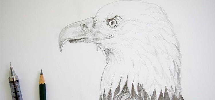 dessiner un aigle facilement en suivant ce tutoriel en vidéo