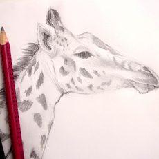 méthode très simple pour dessiner une girafe et faire son portrait pas à pas