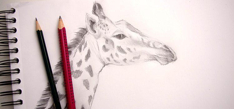 M thode tr s simple pour dessiner une girafe et faire son - Apprendre a dessiner un tigre ...