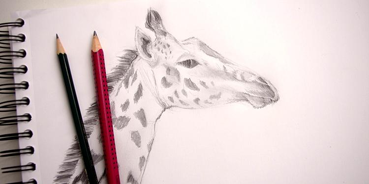 Comment dessiner une girafe anatomie et portrait - Animal a dessiner ...