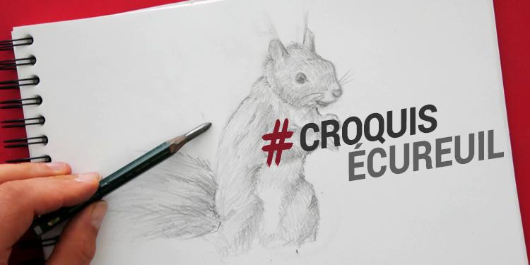 technique pour dessiner un écureuil et réussir à faire de beaux croquis d'animaux