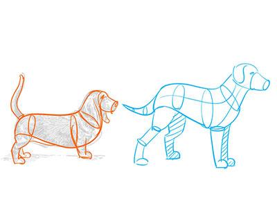 schématiser avant de faire un dessin de chien réaliste